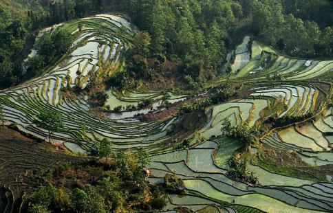 Scenery of Hani terraced fields in SW China's Yunnan
