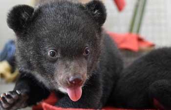 Cute bear cub twins become stars of zoo