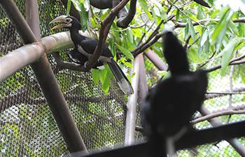 Two newborn oriental pied hornbills debut in Bangkok's zoo