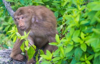 Monkeys seen at Jiuhua Mountain resort in E China