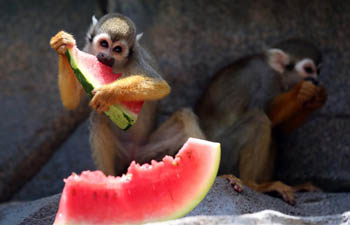 Monkeys enjoy cool mist, watermelon at Quanzhou Wildlife Zoo in Fujian