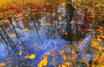 In pics: autumn scenery across China