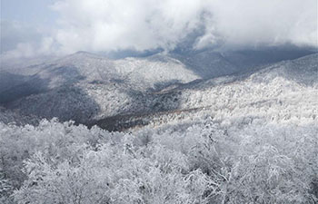 In pics: snow scenery at forest scenic spot in NE China