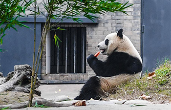 Malaysian-born giant panda meets public after returning home
