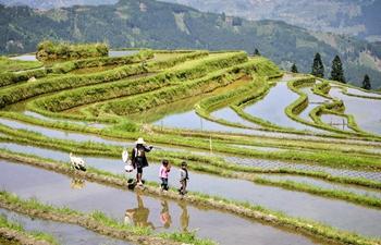Scenery of terraced fields in SW China's Guizhou