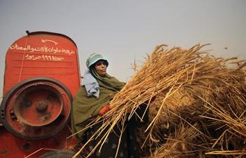 Farmers harvest wheat in Qalyubia, Egypt