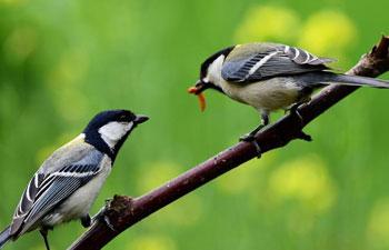 When birds foraging