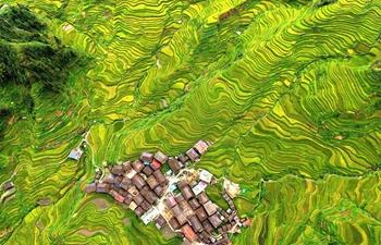 Scenery of terraced fields in S China's Guangxi