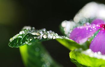 In pics: sparkling dewdrops on plants