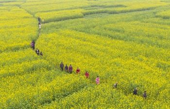 In pics: blooming cole flowers across China