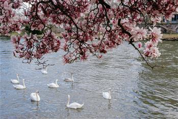 Spring scenery of Strasbourg, France