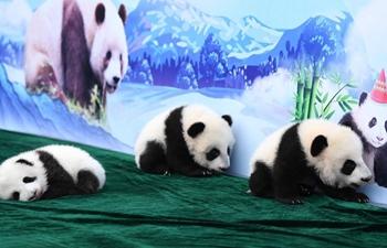 Panda cubs meet public in Xi'an, NW China