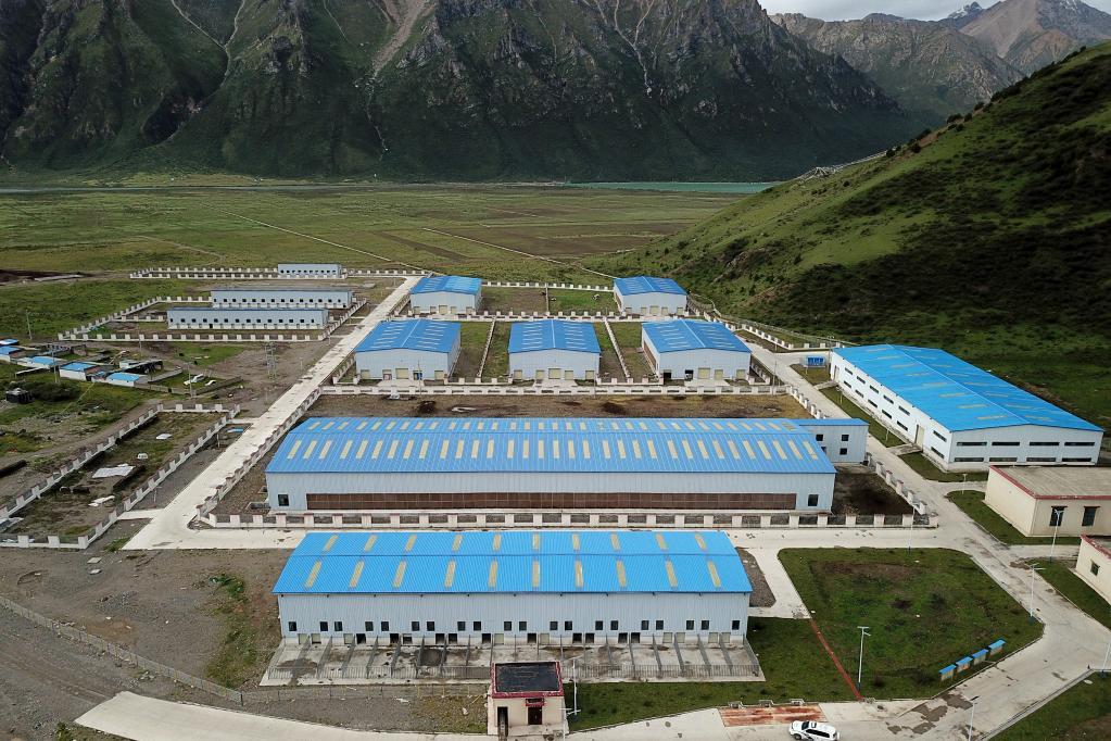西藏嘉黎:娘亞牦牛産業化養殖拓寬致富路