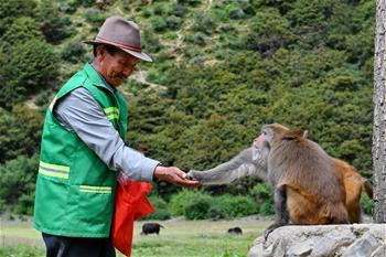 188bet怎么样工布江达县的藏猕猴乐园