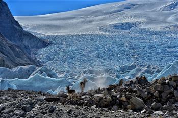 """随青藏高原科考队追寻""""神山圣湖""""间的野生动物"""