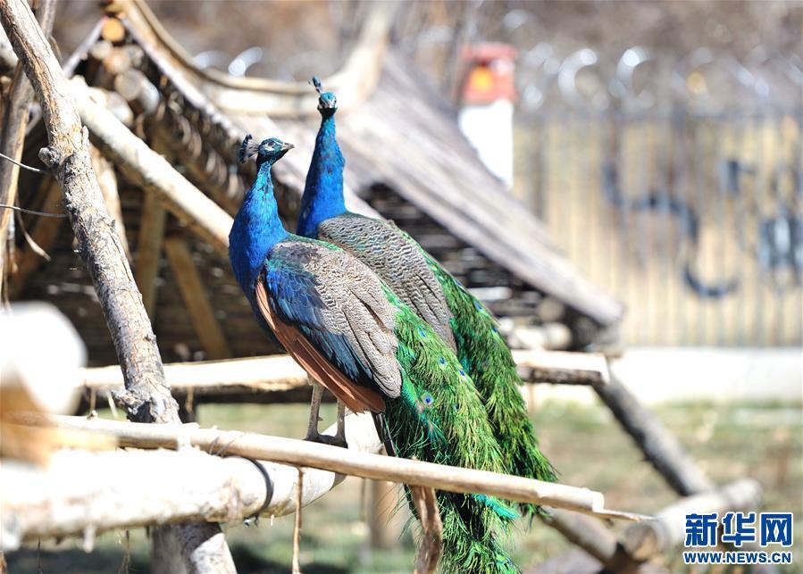拉萨曲水动物园:高原上的动物家园