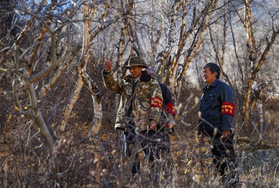 188bet怎么样拉萨:公益林管护见成效
