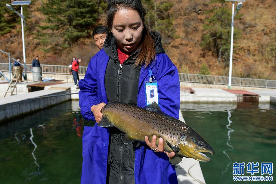 青山绿水鲑鱼肥——亚东鲑鱼里的脱贫故事