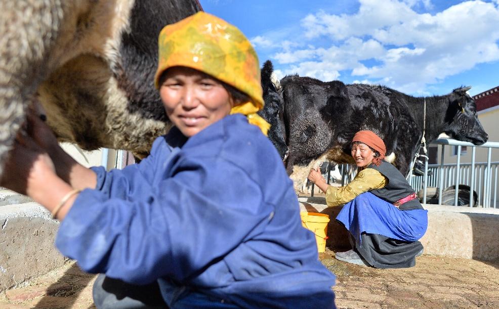 國家奶牛産業技術體係拉薩綜合試驗站挂牌