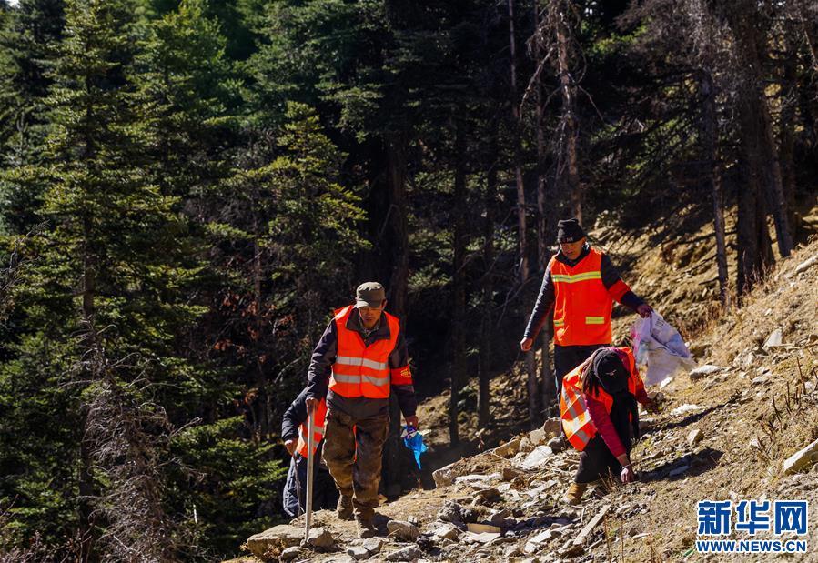 西藏林芝:營造全民護林局面