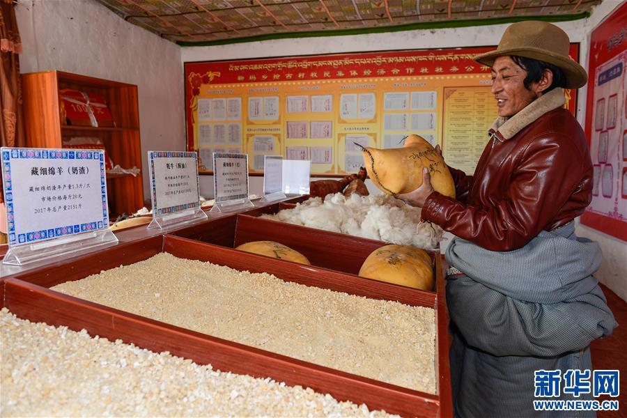 西藏阿裏:牧區改革促脫貧有效推進