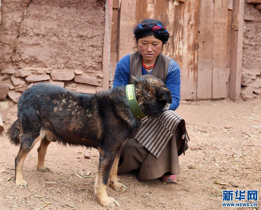 """西藏幹部駐村""""三送""""活動掃描"""
