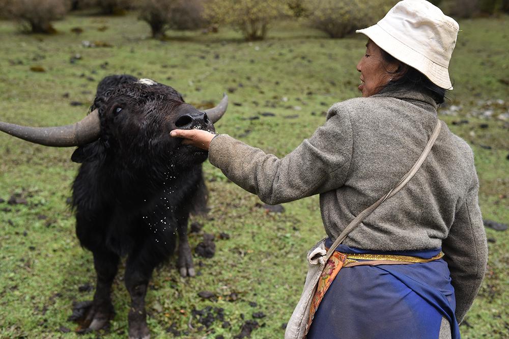 北京最牛的_铜牛 北京最牛的牛