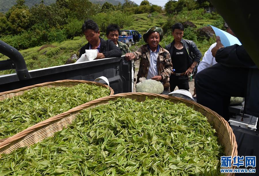 廣東國資組團助推市場化産業援藏