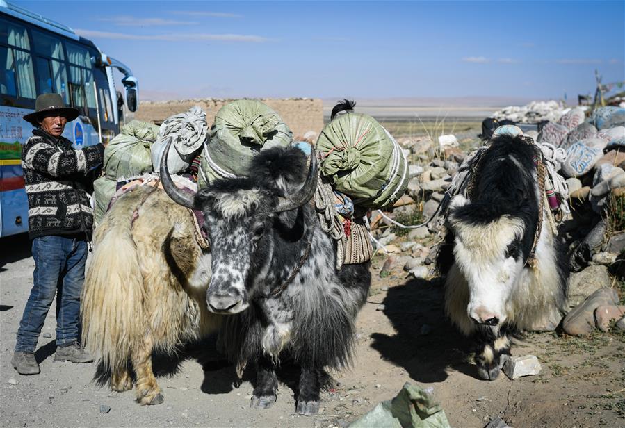 西藏:岡仁波齊山下的牧民致富路