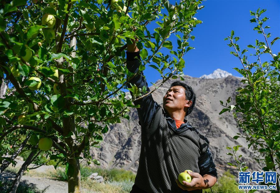 西藏阿裏:邊境鄉發展林果業促增收(圖)