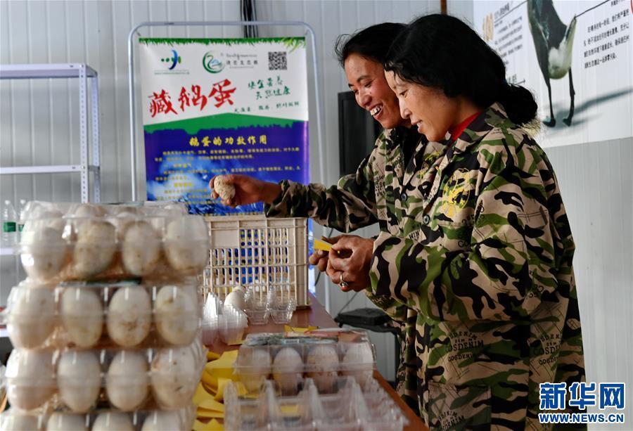 西藏昌都:生態鵝養殖助力脫貧(圖)