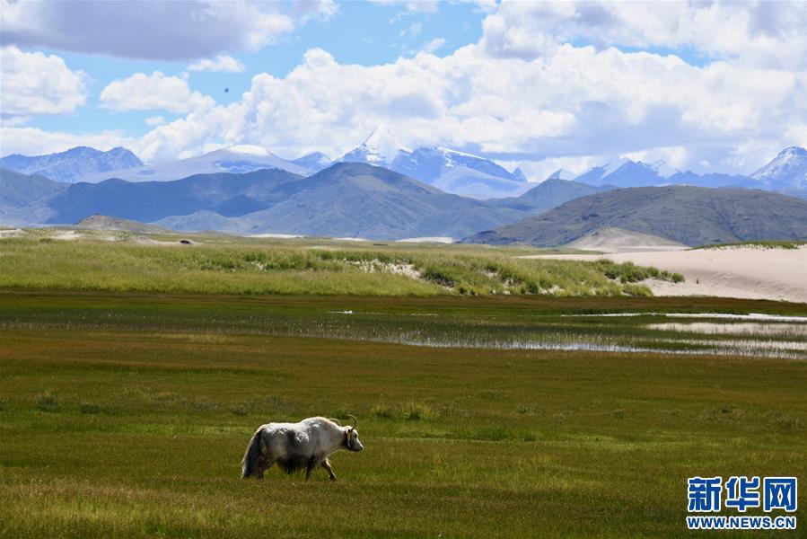 西藏:雅江源頭沙化治理成效顯著(圖)