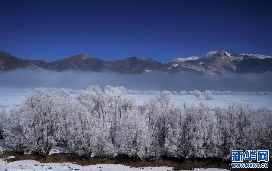 西藏:雅江现雾凇奇观(图)