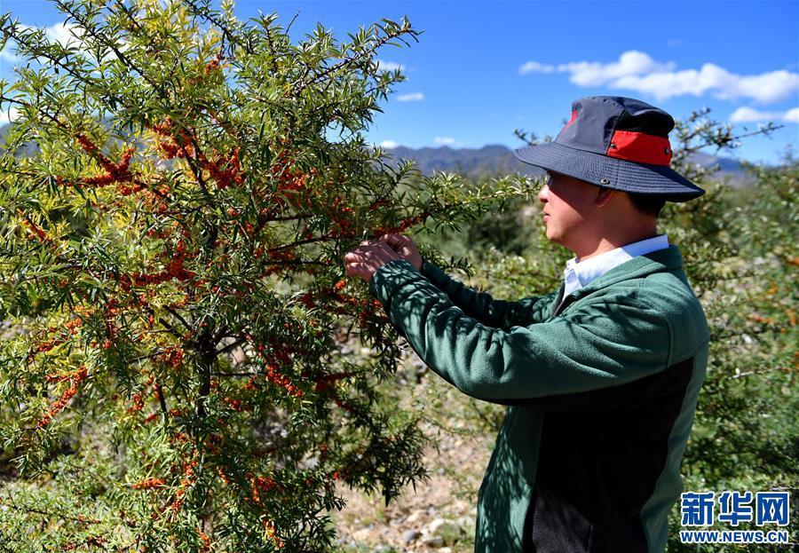 【西藏民主改革60周年】為了高原上的這抹綠