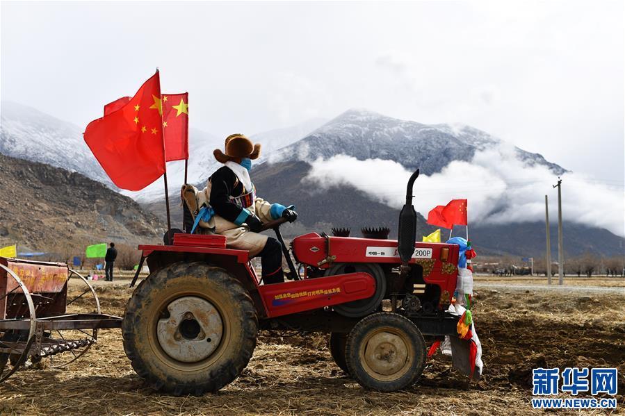 西藏:春耕第一犁(圖)