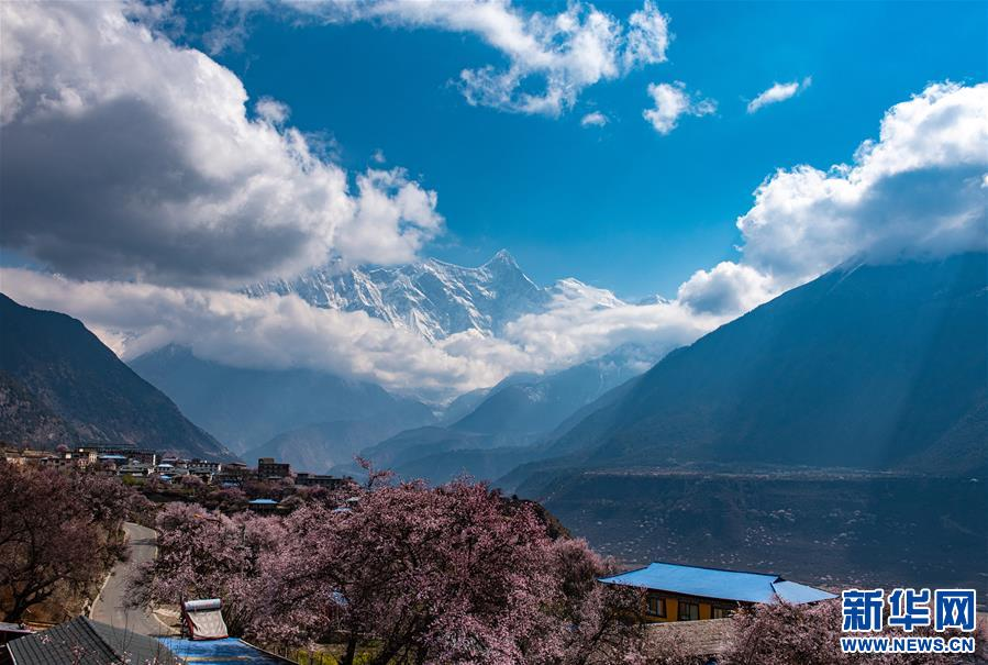 春到雅魯藏布江大峽谷(圖)