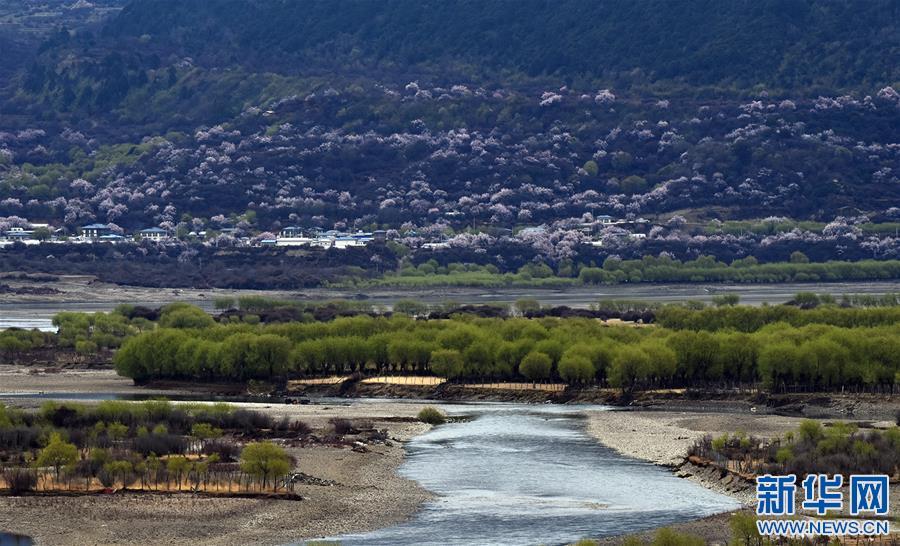 西藏雅尼國家濕地公園春色迷人(圖)