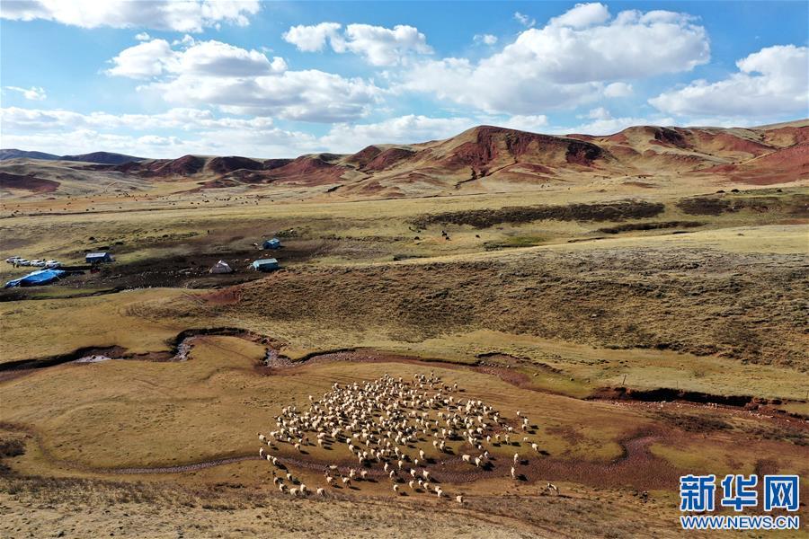 """""""阿旺綿羊""""成就大産業——西藏貢覺縣做大做強扶貧産業見聞"""