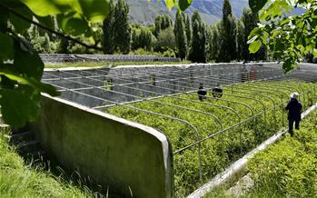 西藏朗縣:發展辣椒産業 助力脫貧攻堅(圖)