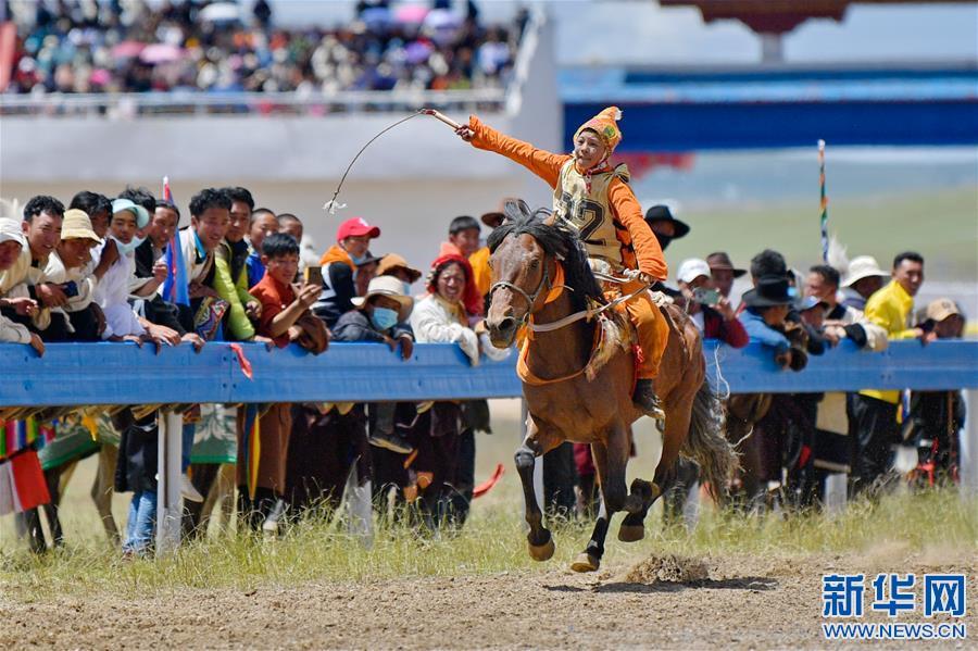 西藏那曲:駿馬馳騁賽馬場(圖)