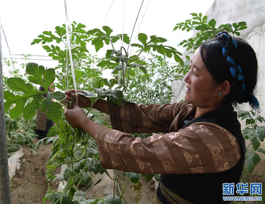 西藏:住進新房子,過上新生活