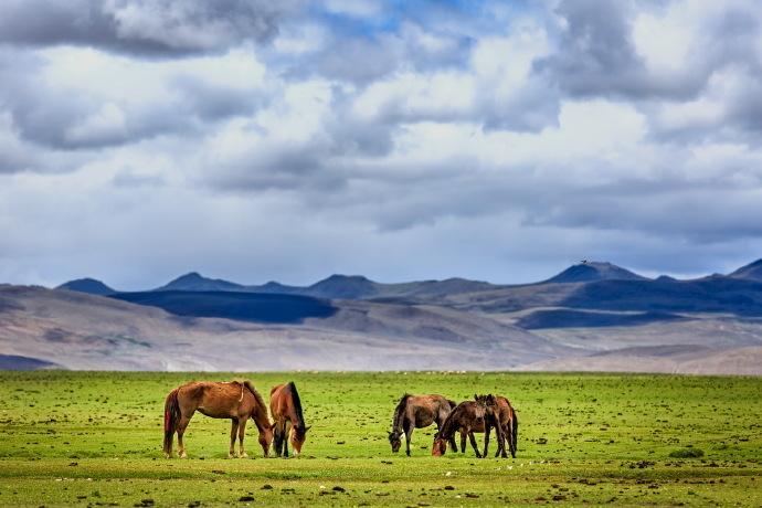 措美縣哲古鎮扎雜村:哲古草原上的新生活