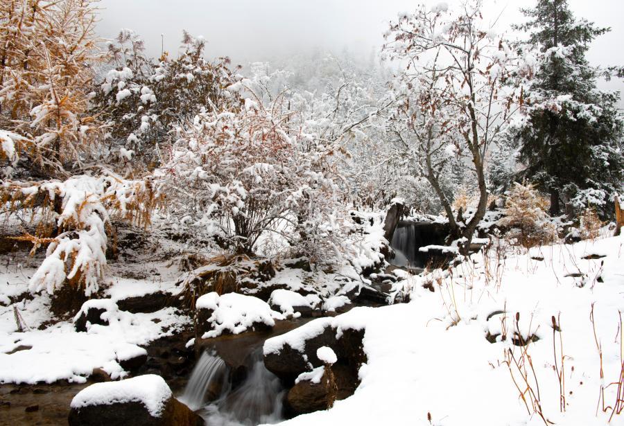 林芝降雪(圖)