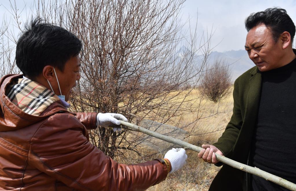 索朗羅布:藏北草原上的植樹夢(圖)